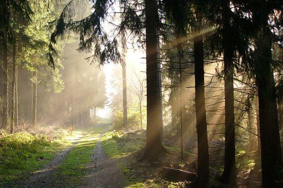 Autumn in Teutoburg Forest