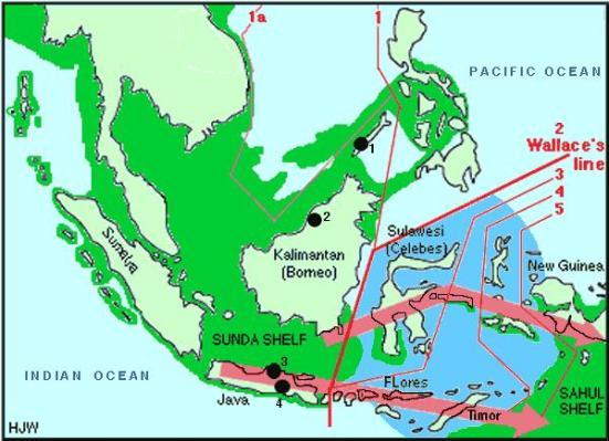 1. Động Tabon 2. Động Niah 3. di chỉ người ở Ngandong 4. di chỉ người ở Wajak. Màu xanh đậm lá cây là thềm Sunda, màu đỏ là đường Wallace chia địa lý sinh học ra hai vùng tiến hóa khác nhau về động và thực vật: vùng Sunda (Đông Nam Á) và Sahul (Papua và Úc Châu)