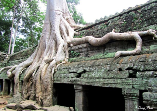 Ta Phrom – Photo: TốngMai