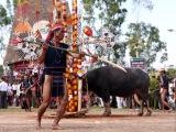Lễ hội ăn trâu (đâm trâu) ở Tây Nguyên- Quan điểm và những vấn đề đặt ra nhìn từ góc độ vănhóa