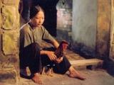 Tiểu thuyết Việt Nam thời kỳ Đổi Mới (1986-2016) những bước thằngtrầm