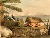 Tình hình xứ Nam Hà cuối thế kỷ18