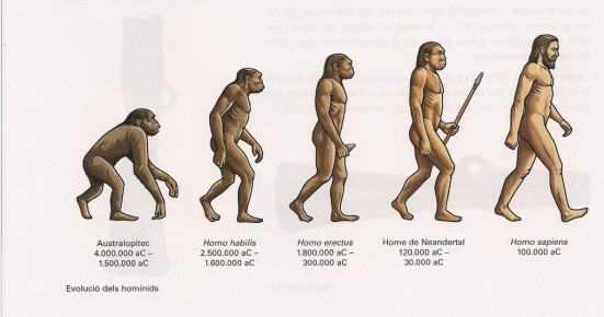 evoluciohumana.jpeg