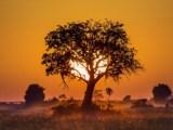 Nam Phi, đất tổ của nhânloại