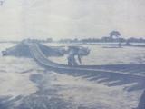 Kinh tế nông nghiệp Việt Nam thời cậnđại